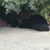 Kŕmením mačiek podporujete výskyt hlodavcov