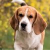 Informácia pre majiteľov psov